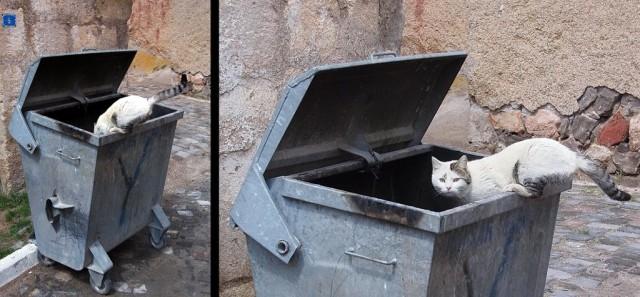 Есть очень хочется. Ну а с этим котом из Аваноса всё понятно.