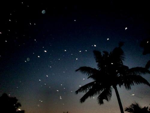 ночные комарики