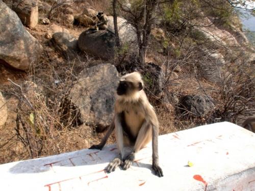 обезьянка Хампи