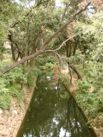 Канал уходит в лес