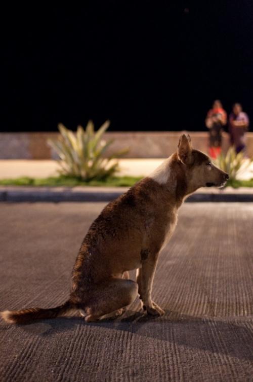 Собак сидел и ждал...
