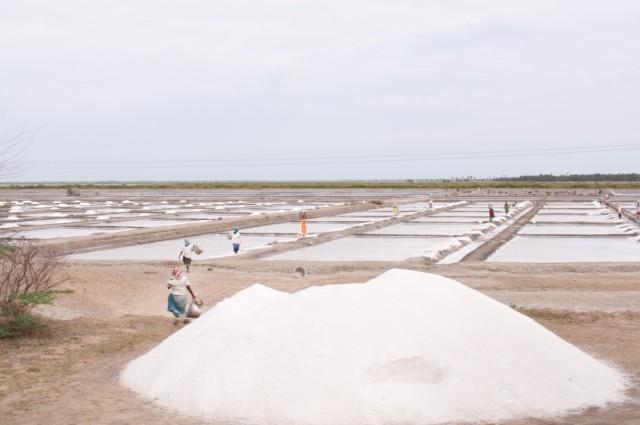 соль по дороге из Пондичерри в Махабалипурам