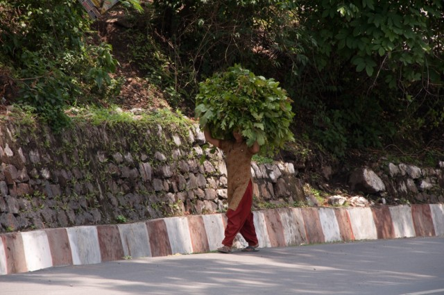 жалко местных женщин...уважения к ним ноль,и вся тяжёлая работа на них...
