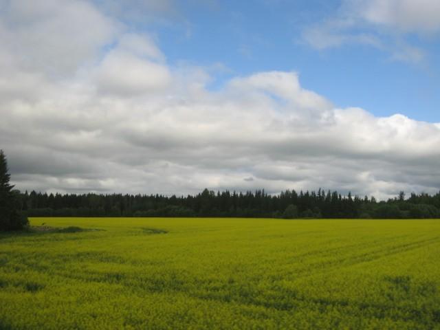 Другое поле
