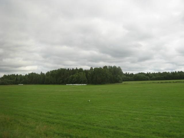 Аист в поле