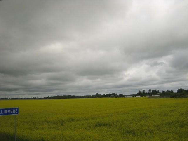 Снова поле