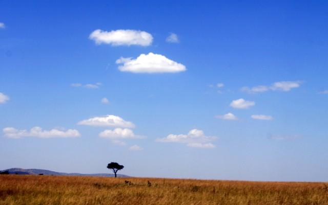 Африканские просторы