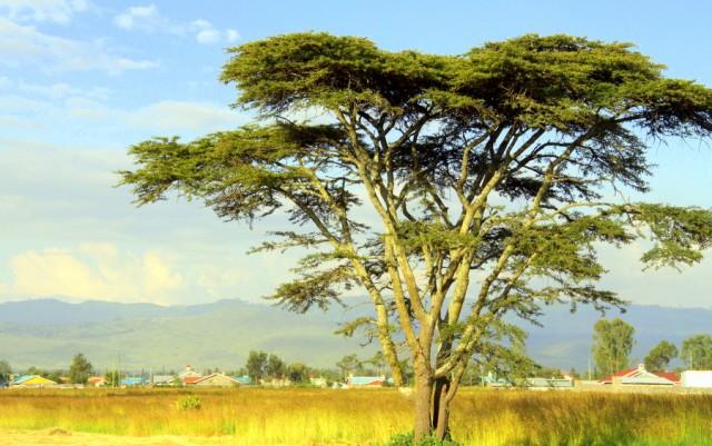 Украшение африканского пейзажа