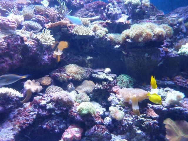 океанский аквариум