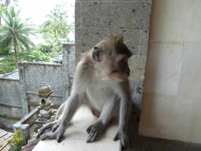 гость на балконе