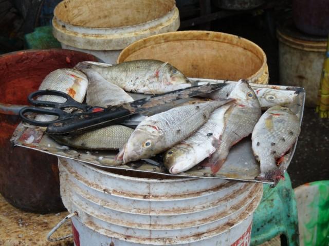 обалденная рыбка в Каньякумари