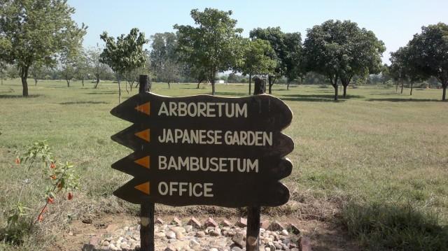 в чудном ботаническом саду