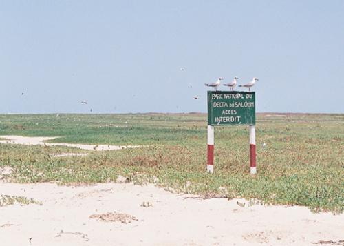 А вот на Птичьем острове - напротив: птиц - видимо-невидимо. Потому как двуногим варварам вход заказан.