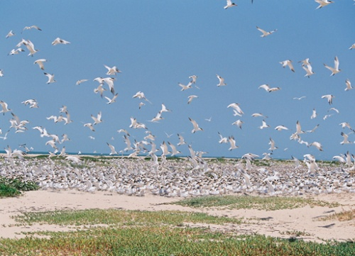 Но самыми красивыми были колонии птиц, которых мы спугнули...