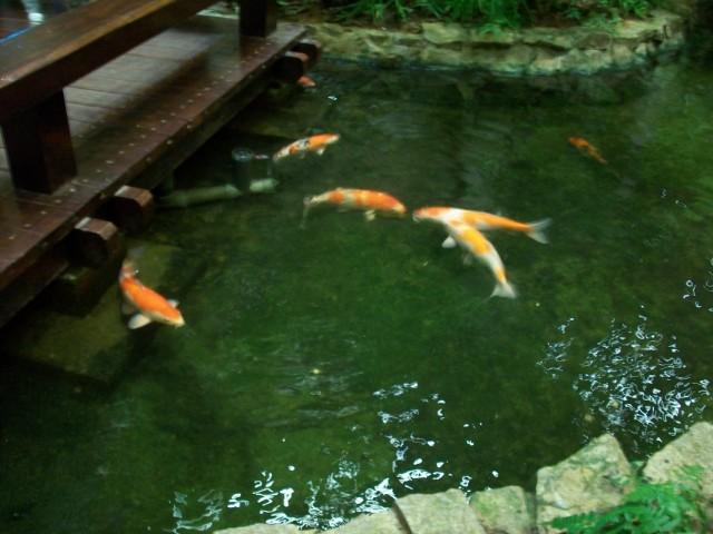 И рыбы здесь себя чувствуют совершенно естественно