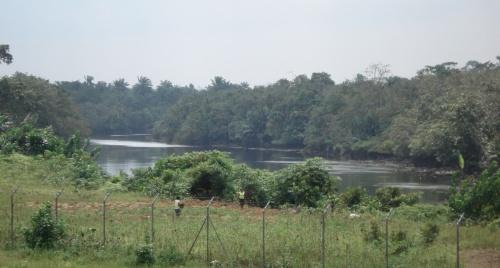 река в джунглях за забором