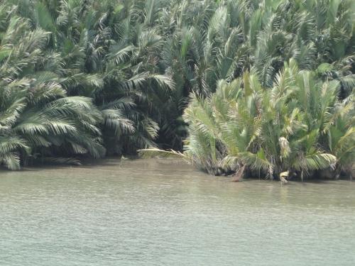 джунгли-2