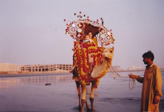 Верблюд с паланкином