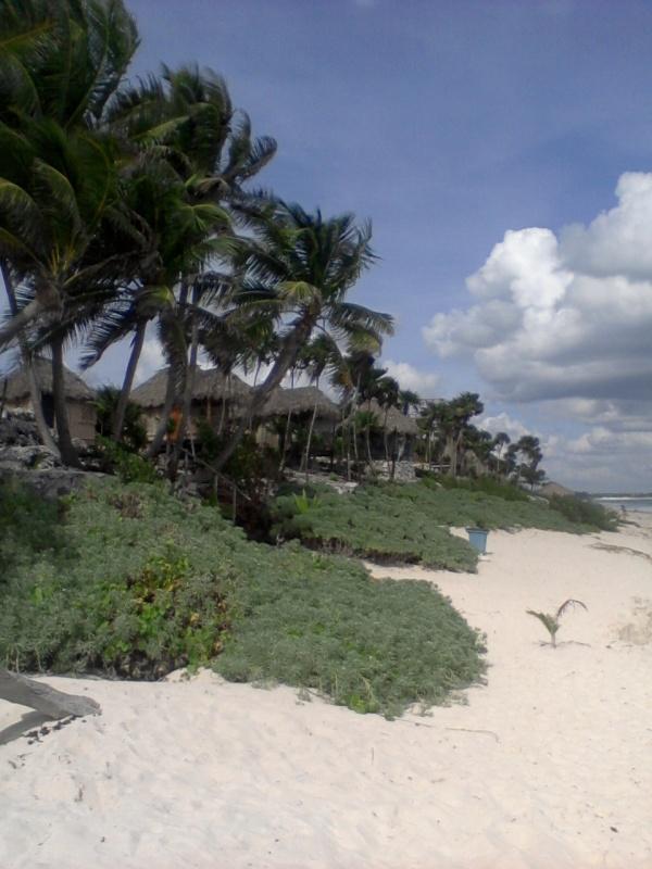 Хижины на пляже - от 100 долларов в сутки