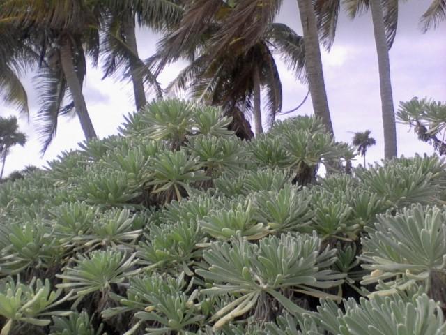 Прибрежная растительность 1