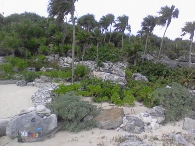 Прибрежная растительность 2