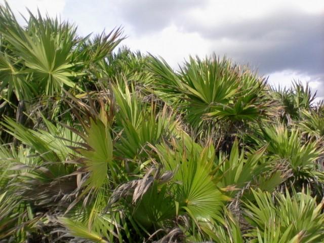 Прибрежная растительность 3