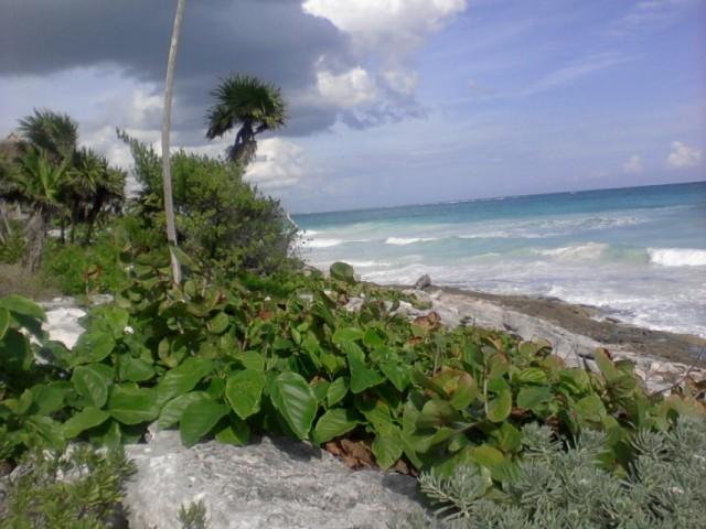 Прибрежная растительность 4