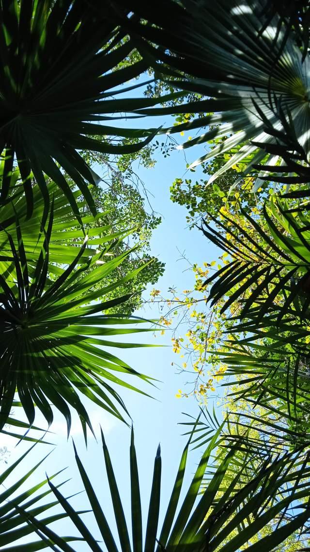Из леса в небо