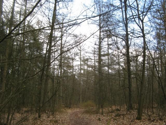 Пора идти. На дорогу возвращаться не охота - пройду через Лес. Тем более, что где-то там должны быть Кельтские Поля - древние кельтские могильники...
