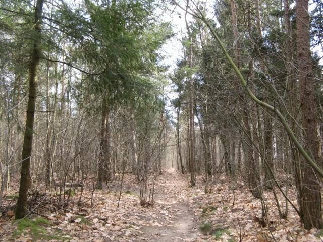 Срезал путь по тропке через Лес