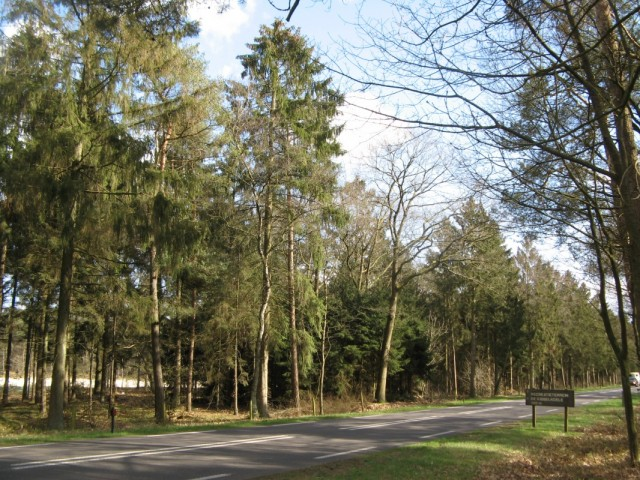 Ага, а вон и озеро-карьер De Kibbelkoele за деревьями...