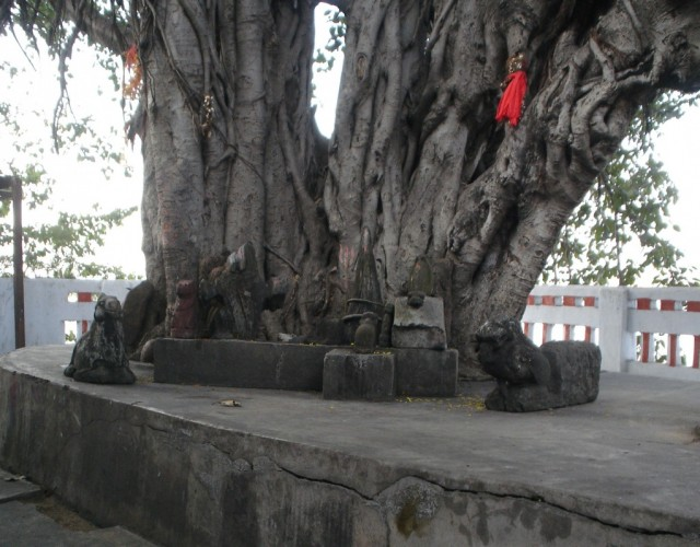 алтарь у священного баньяна