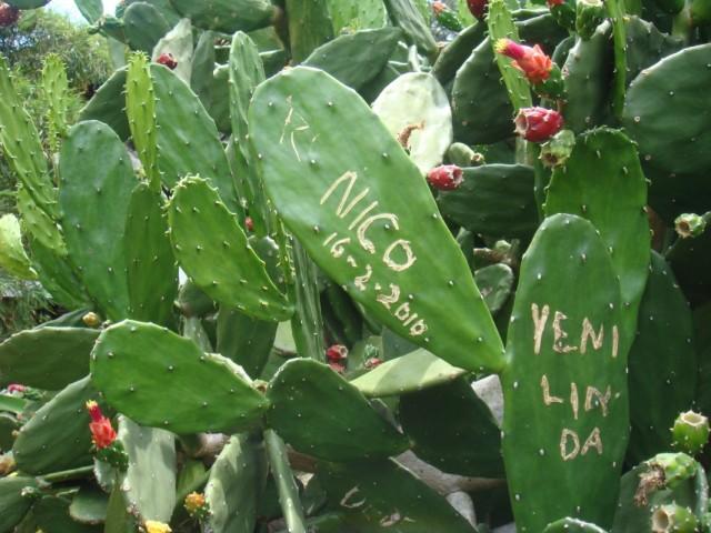 исписаные кактусы
