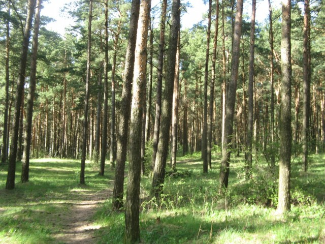 Пиритский лес