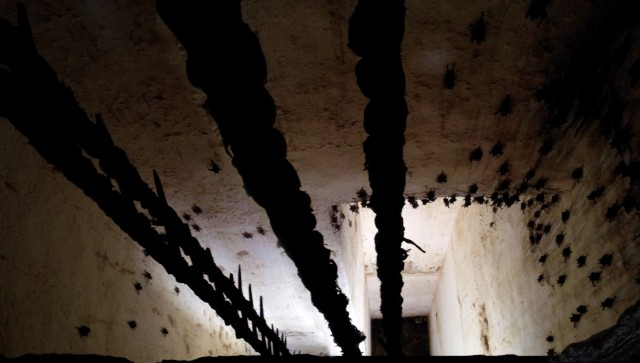 мышки в колодце