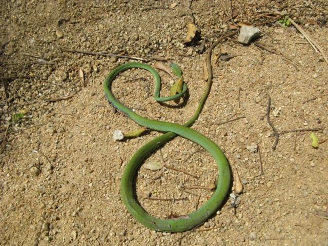 Неживая змеюка на дороге