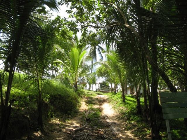 Самый конец дороги на соседний пляжик Хаад Вай Нам