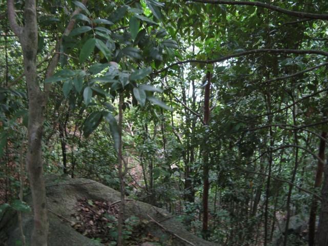 Вниз через лес