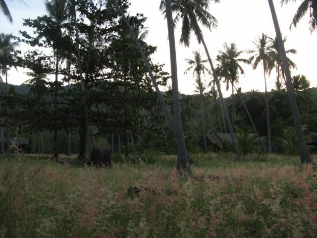 Сельская местность на закате