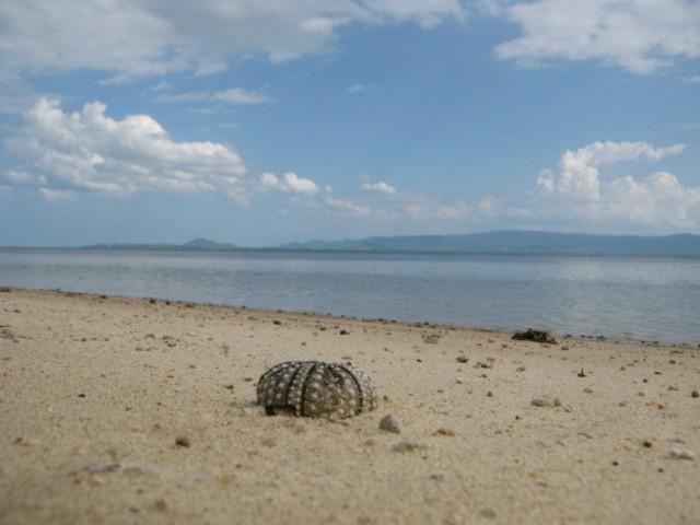 Скелет морского ежа на берегу Ао Хин Лор. Хреново наступить на живого ёжика, надо сказать, кстати...