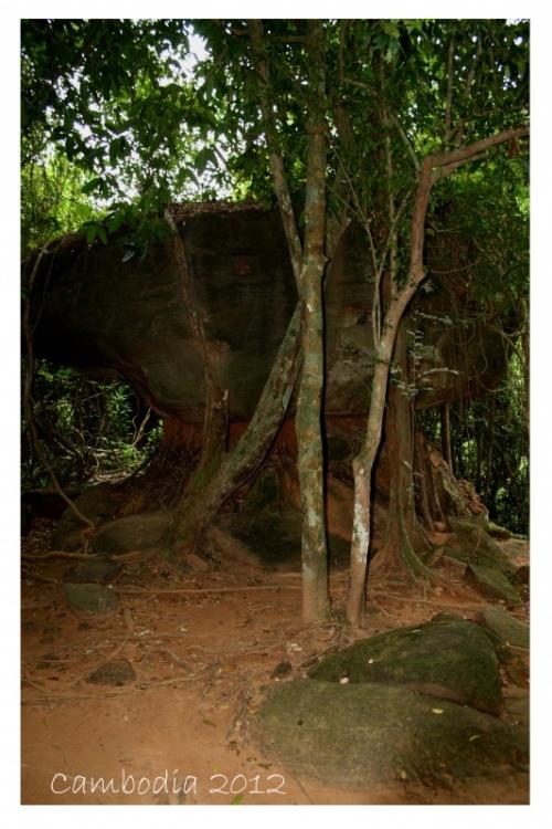каменный гигантский гриб