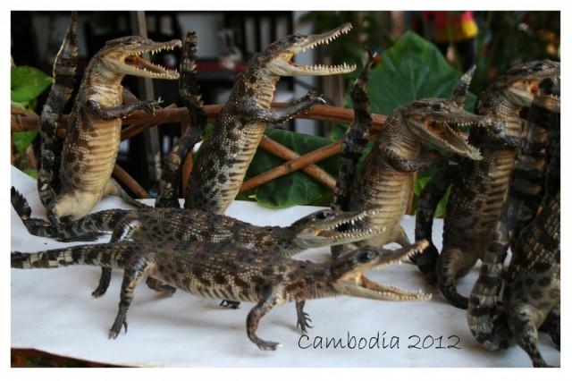 крокодилята