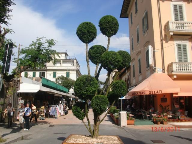 """""""Дерево"""" на перекрестке, и маленький рыночек за ним"""