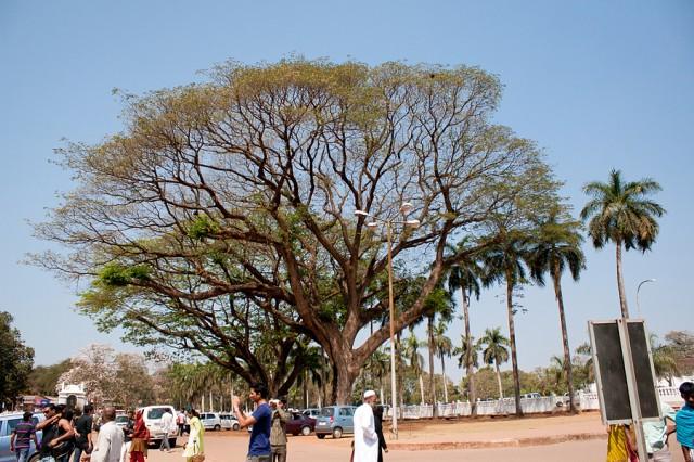 то самое дерево