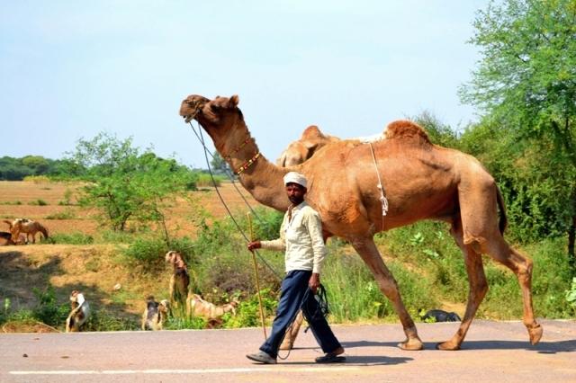 Где то по дороге из Джайпура