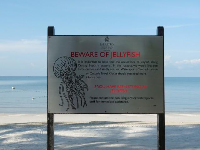"""В воде нас всё время что-то """"щипало"""", создавая неприятные ощущения- оказалось прозрачные миллионы медузок размеров не больше сантиметра"""