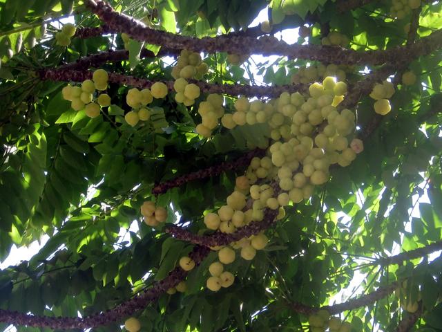 грозди не известно чего