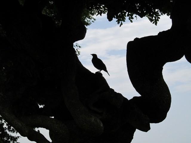 Мугал гарденс, Сринагар