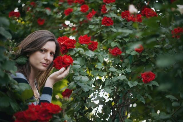 Лена (сад роз)