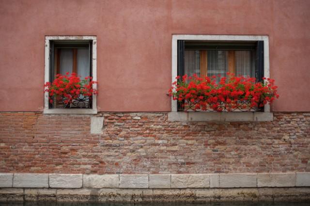 за всеми окнами обязательно цветочки